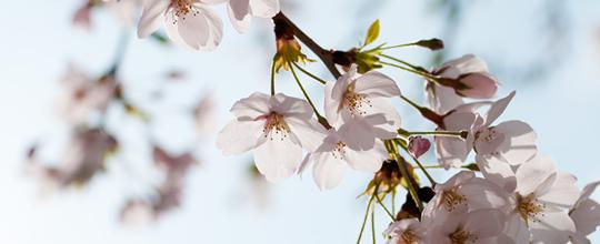 春になりました(総務部)